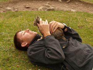 the healing power of cat purrs