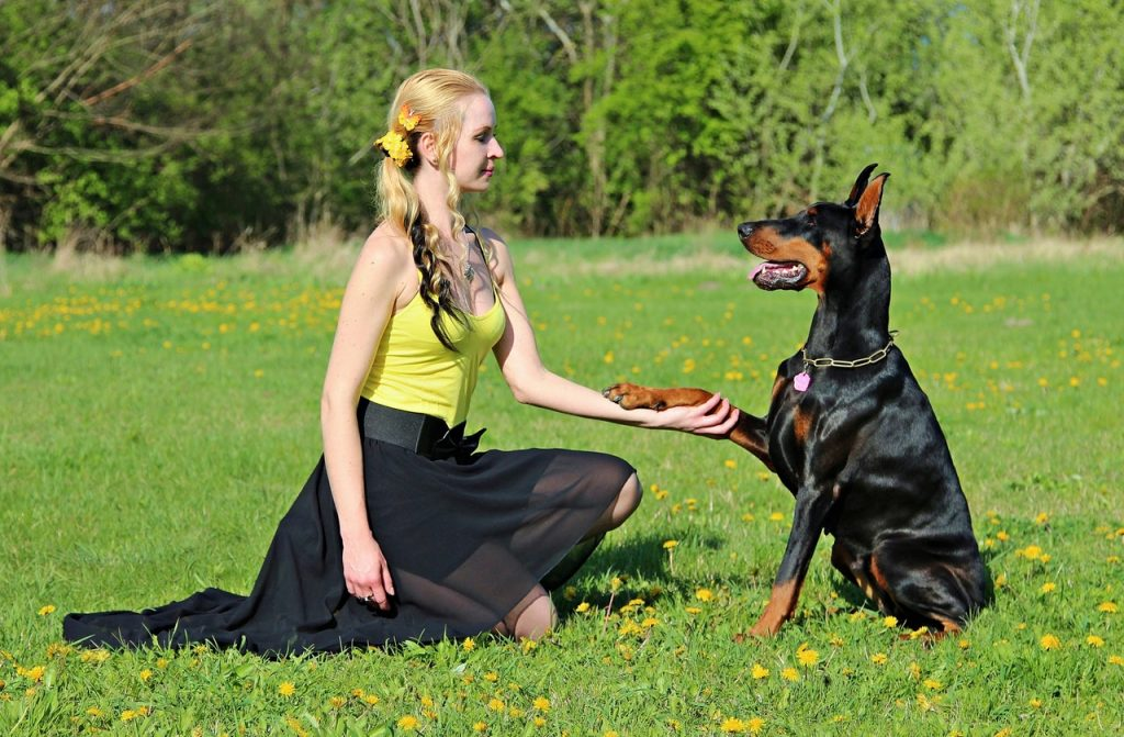 The Basics of Dog Training – Part 3