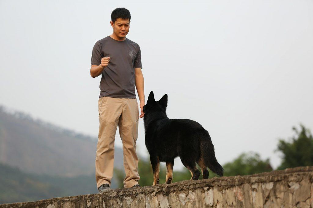 The Basics of Dog Training: Part 1