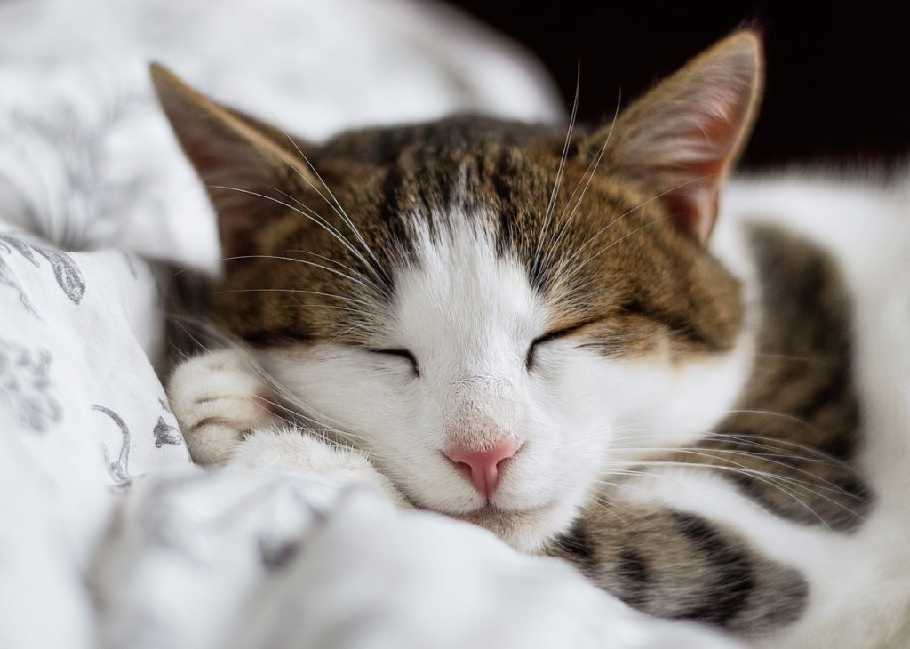 Sleeping With Your Cat: Is It A Good Idea?