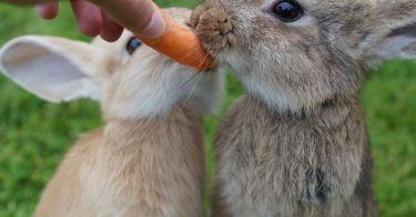 what not to feed your rabbit