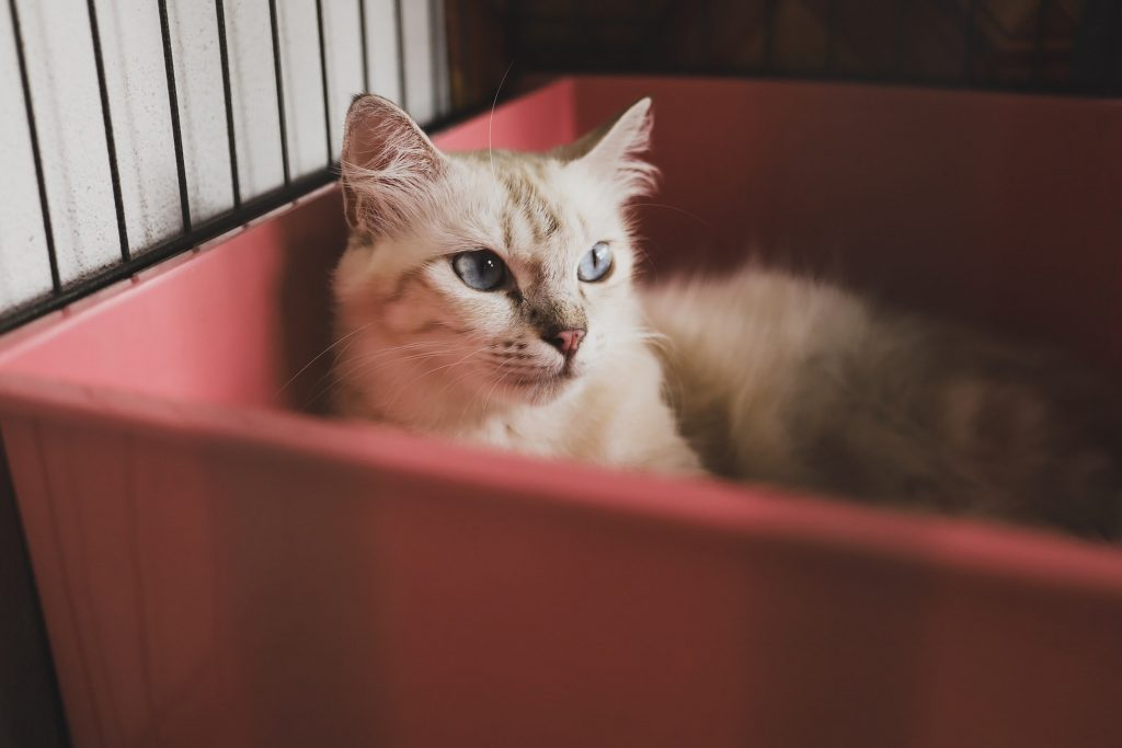 Tips For Cleaning Your Cat Litter Box Correctly