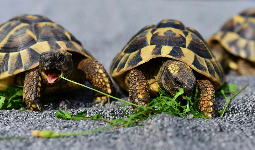 Keeping a Turtle as a Pet: The Basics