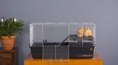 Best Guinea Pig Cage