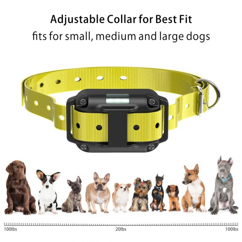 best dog training collar