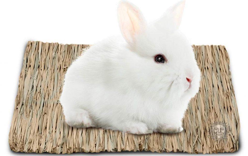 Best Rabbit Bedding