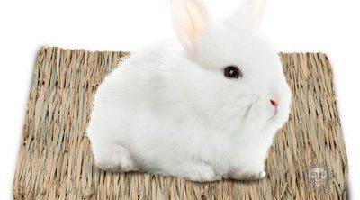 best rabbit bedding