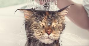 best cat shampoo