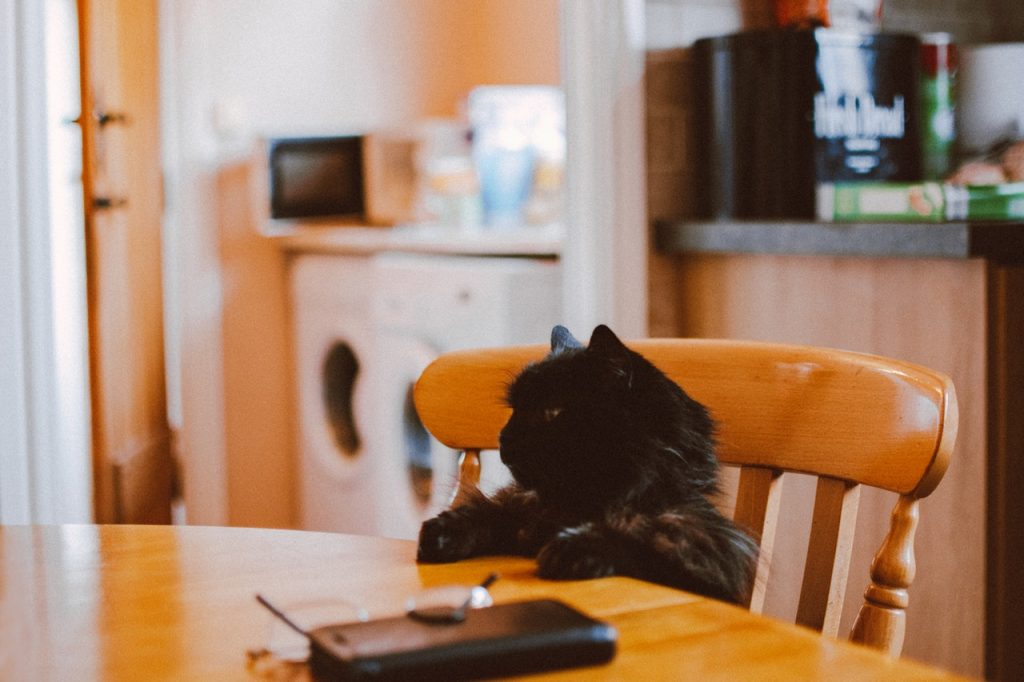 Best Hypoallergenic Cat Foods For Allergic Cats