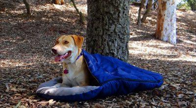 dog sleeping bag