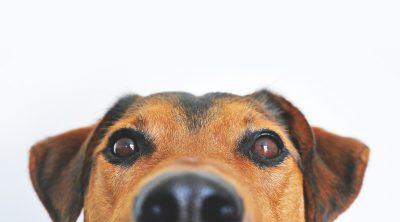 Dog Skin Tag