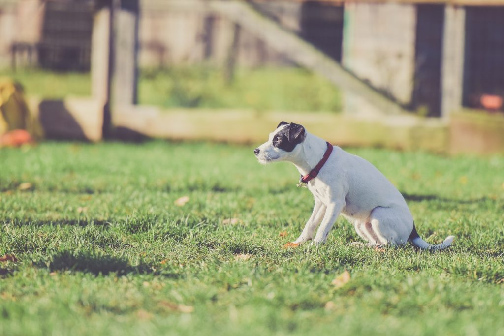 What Pet Parents Need to Know About E-Collar Training