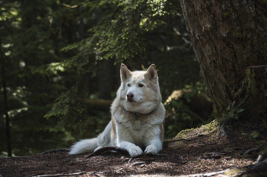 Best Dog Nail Grinder – A Dog Owner's Guide