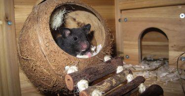 best hamster bedding