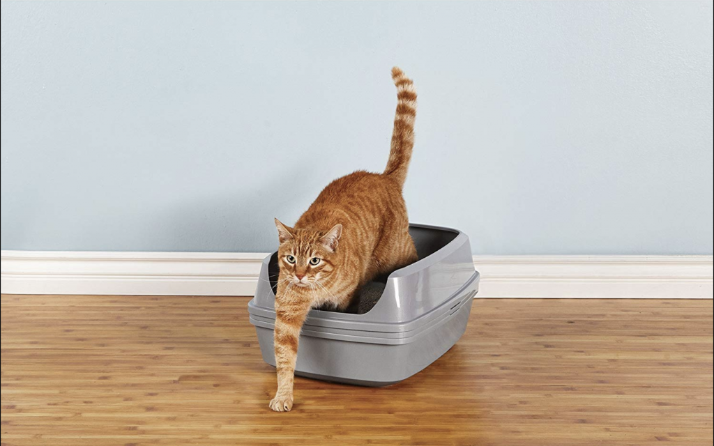 A Comprehensive Guide To The Best Sifting Litter Box For Cats