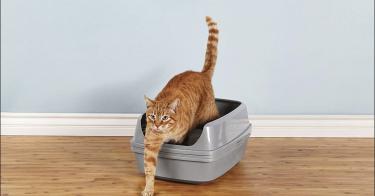 best Sifting Cat Litter Box