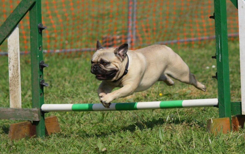 Acquiring Essential Puppy Training Tips
