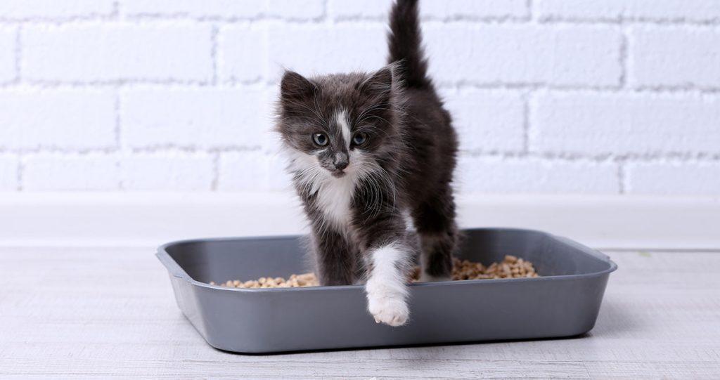 Best Clumping Cat Litters – A True Boon For the Cat Owners