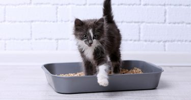 Best Clumping Cat Litters