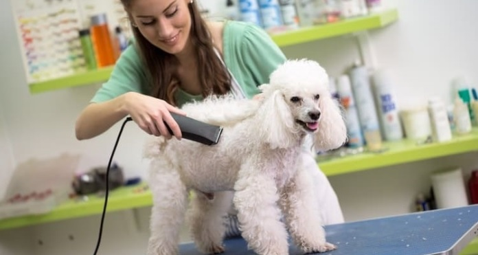 Dog Clippers for Poodles: Things to Know for the Dog Owners