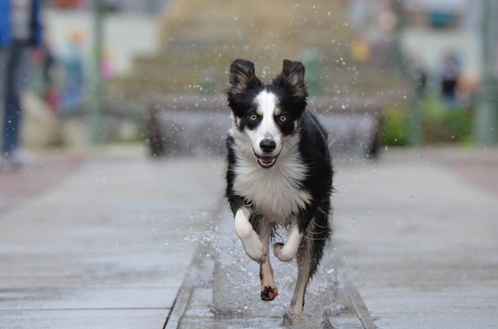 Best Dog Water Fountain: How to Choose the Perfect One