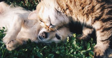 How can therapeutic diets help cats and dogs