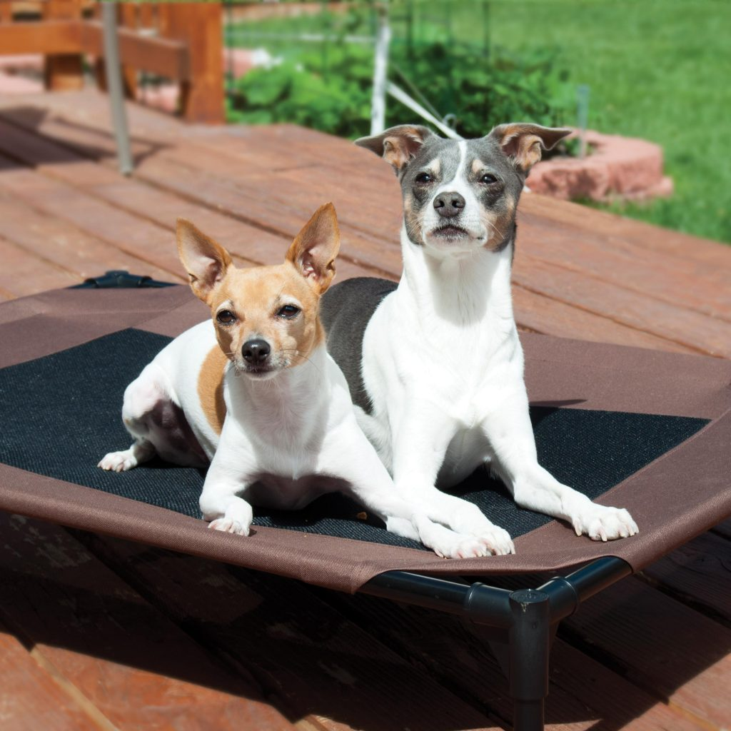 How to Find the Best Raised Dog Bed Easily