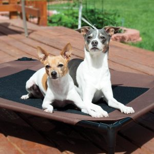 Best Raised Dog Bed