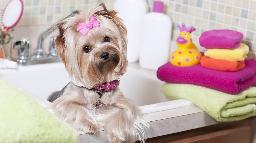 Best Shampoo for Yorkies: Keeping Your Pup Fresh and Clean