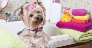 Best Shampoo For Yorkies