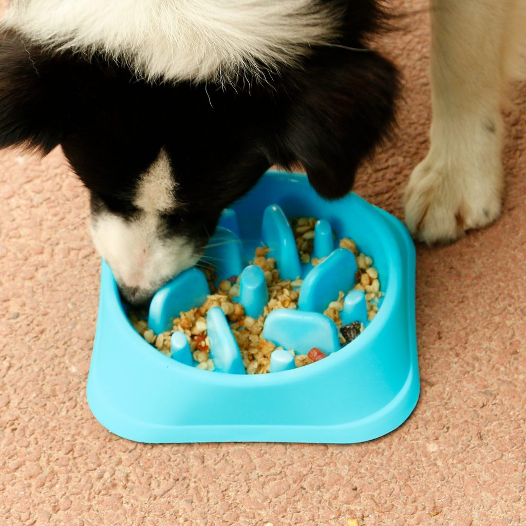Slow Feeder Dog Bowl – Everything You Need To Know About Slow Feeder Dog Bowls