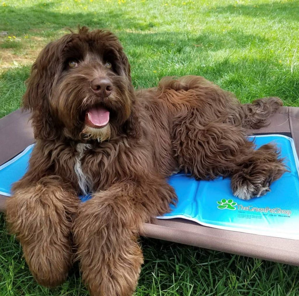 A Buyer's Guide for the Best Cooling Pad for Dogs