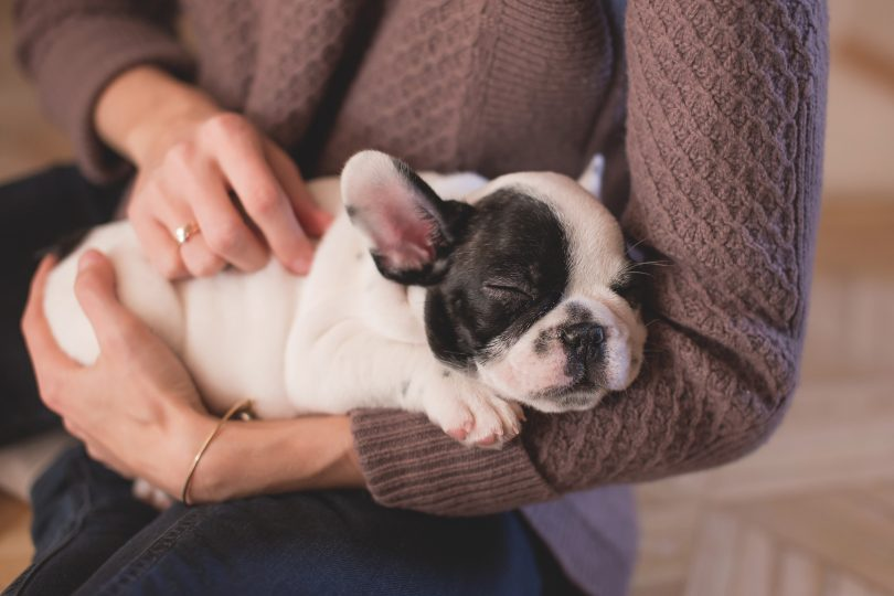 Xanax for Dogs What You Need to Know