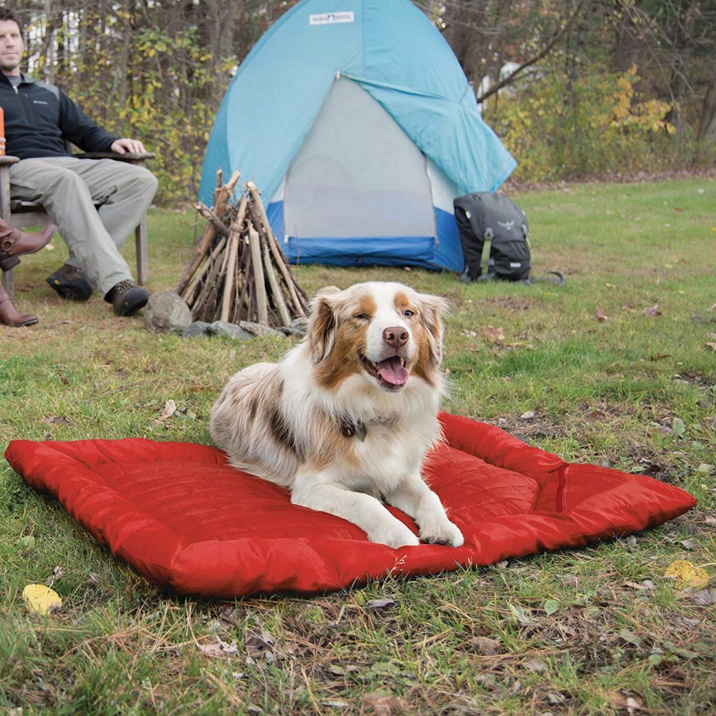 Best Outdoor Dog Bed: How to Choose the Right Outdoor Dog Bed For Your Pet
