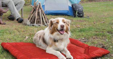 Best Outdoor Dog Bed