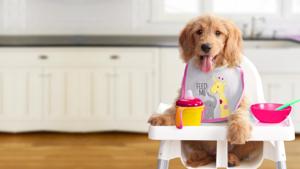 High Calorie Dog Food – Best Brands and Options For Healthier Dogs