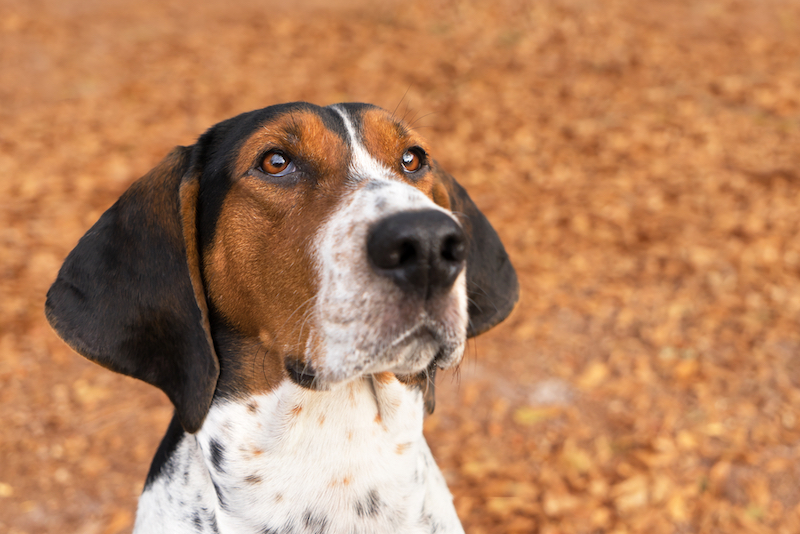 best hunt dog breeds